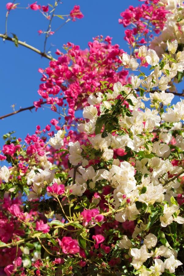 Fleurs mélangées image stock