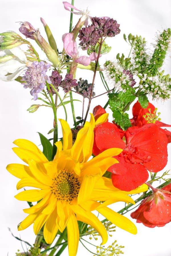 Fleurs mélangées photos libres de droits