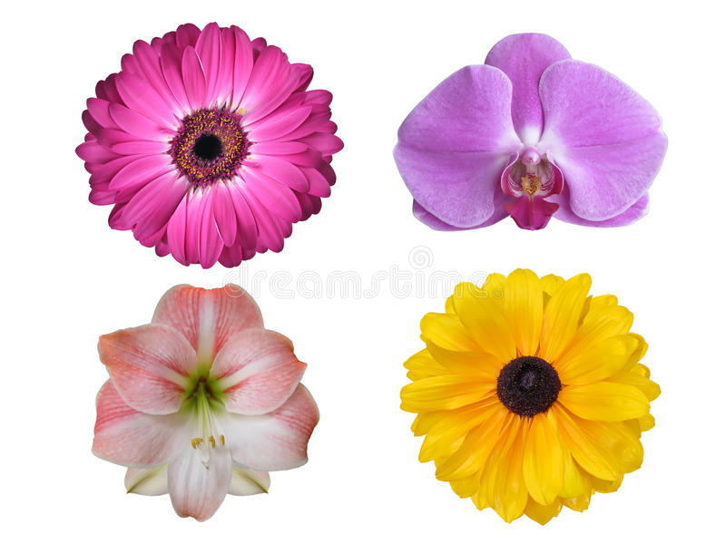Fleurs mélangées d'isolement images stock