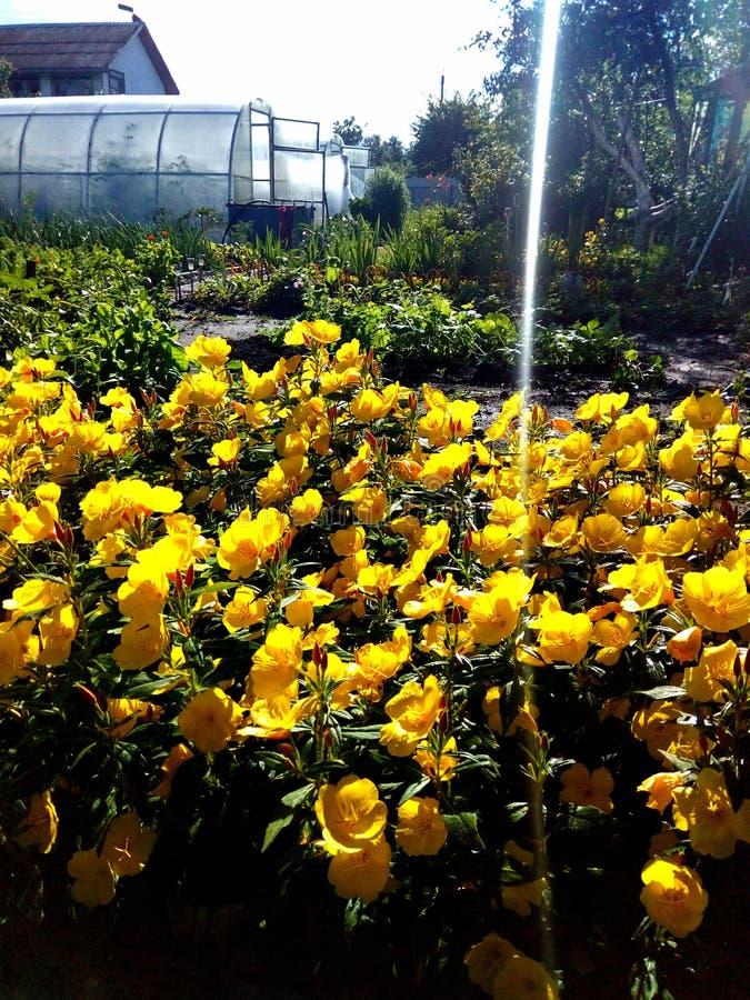 Fleurs Maison de Contry image libre de droits