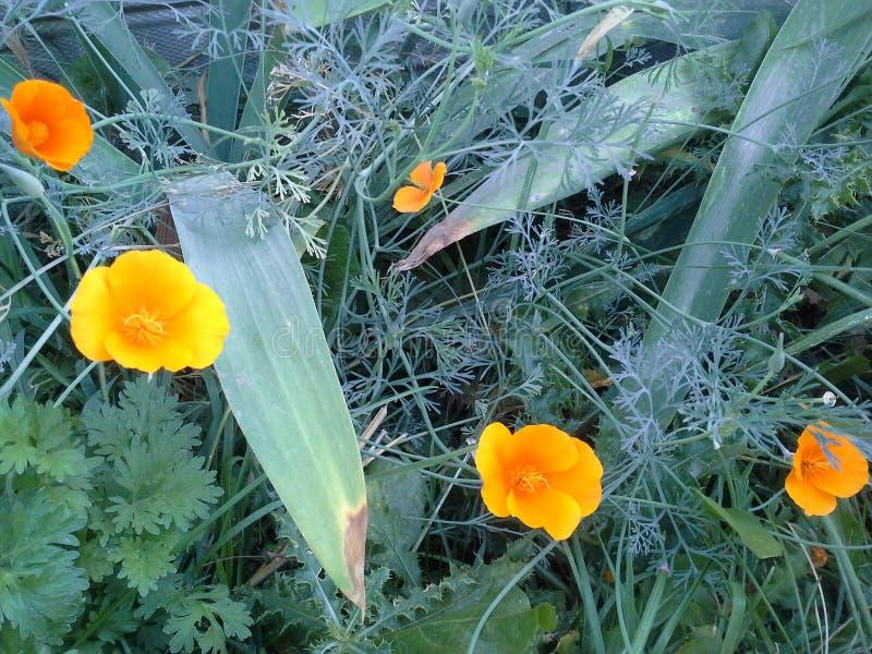 Fleurs malpropres photos stock