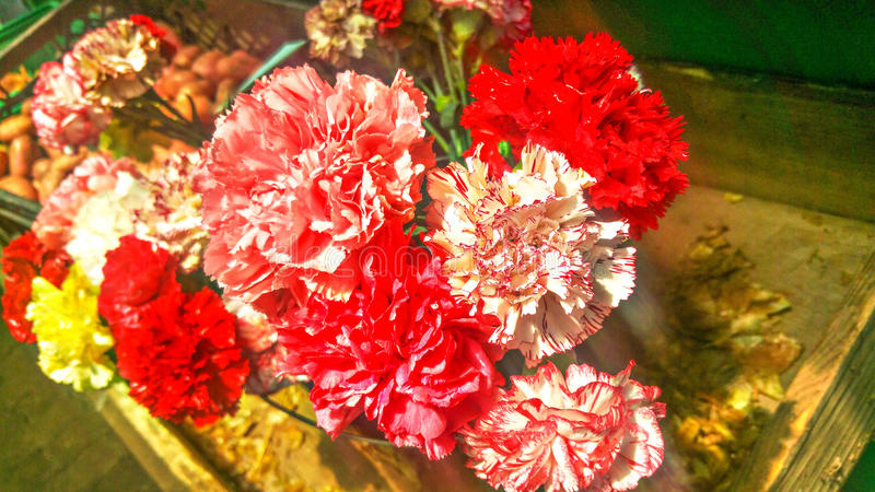 Fleurs merveilleuses d'île de la Madère photographie stock