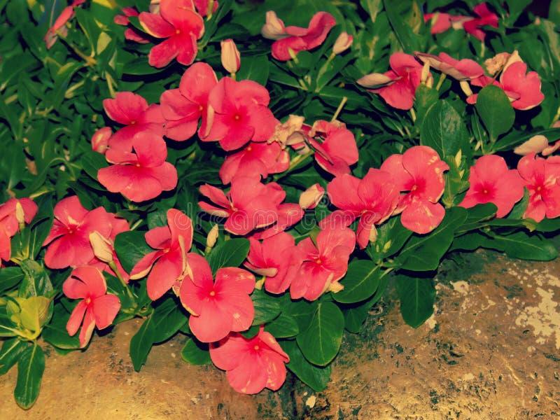 Fleurs mignonnes de jardin sous le ciel photo stock