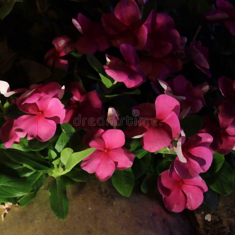 Fleurs mignonnes de jardin sous le ciel la nuit photo libre de droits