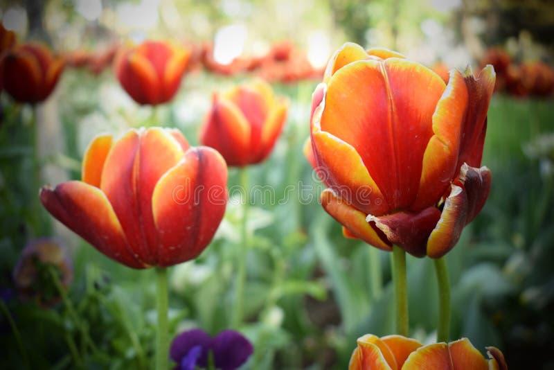 Fleurs minuscules photographie stock