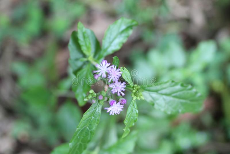Fleurs minuscules sauvages photos stock
