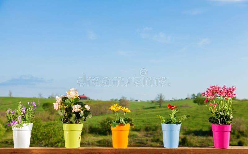 Fleurs mises en pot