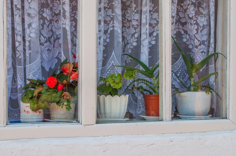 Fleurs mises en pot dans la fenêtre photos libres de droits