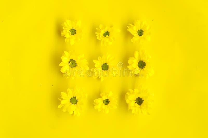 Fleurs - modèle sur le fond jaune photographie stock