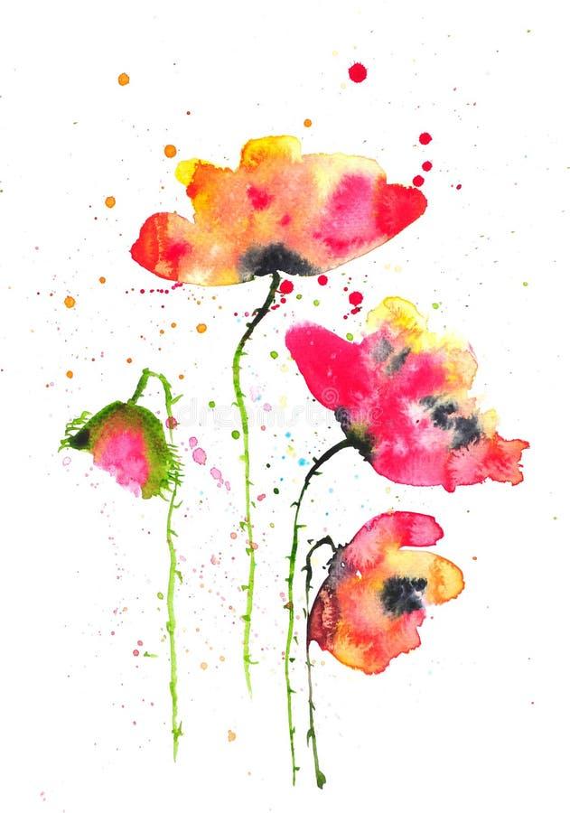 Connu Fleurs Modernes De Pavot, Illustrateur D'aquarelle Illustration  AI68