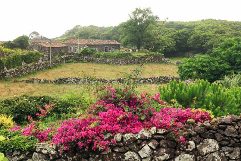 Fleurs n'importe où sur l'île de Flores photo libre de droits