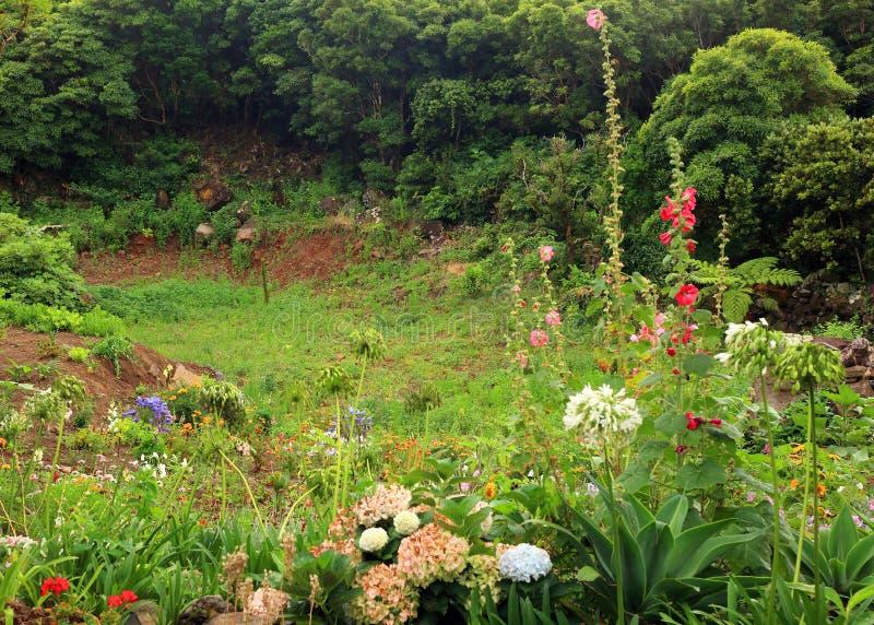 Fleurs n'importe où sur l'île de Flores photo stock