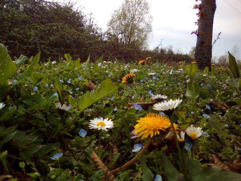 Fleurs royalty free stock photos