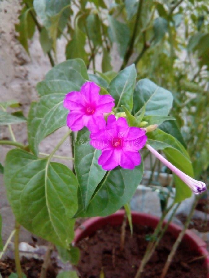 Fleurs naturelles photographie stock
