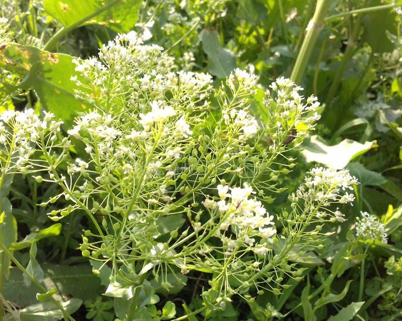 Fleurs naturelles image stock