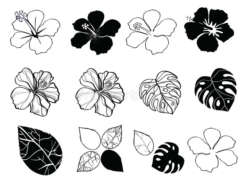 Fleurs noires et blanches des ketmies illustration stock