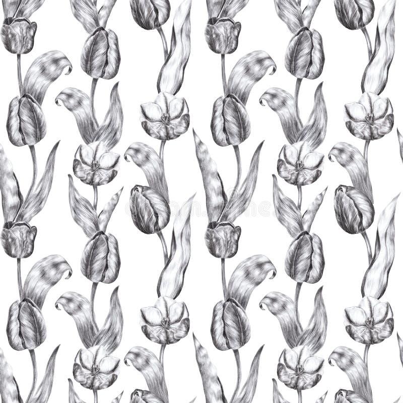 Fleurs noires et blanches tirées par la main de tulipe d'illustration de crayon de charbon de bois dans le style de cru sur un fo illustration libre de droits