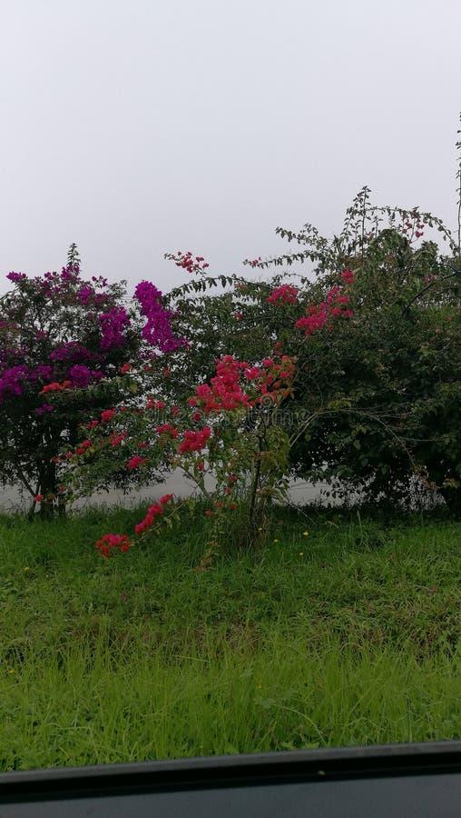 Fleurs nuageuses images libres de droits
