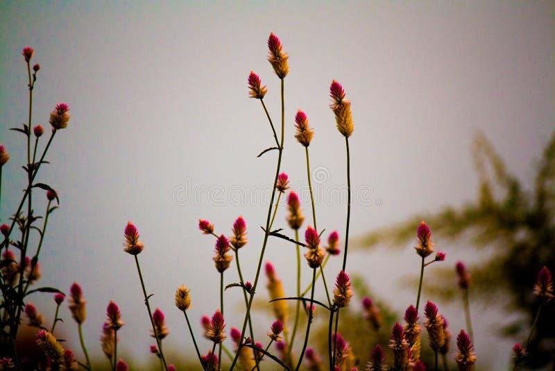 Fleurs ondulées photo stock