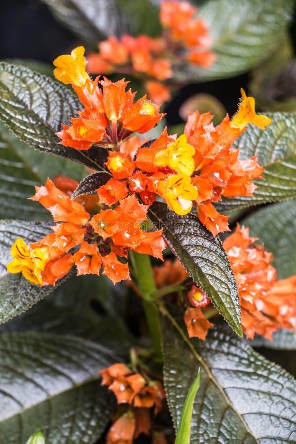 Fleurs oranges à la maison près de ma maison photo stock