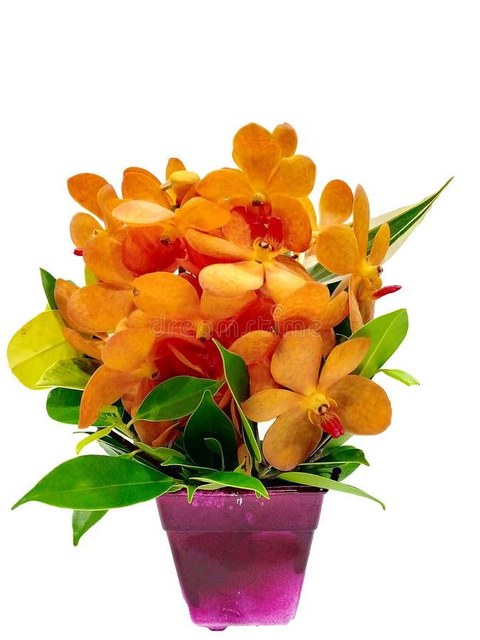 Fleurs oranges dans le pot photographie stock libre de droits
