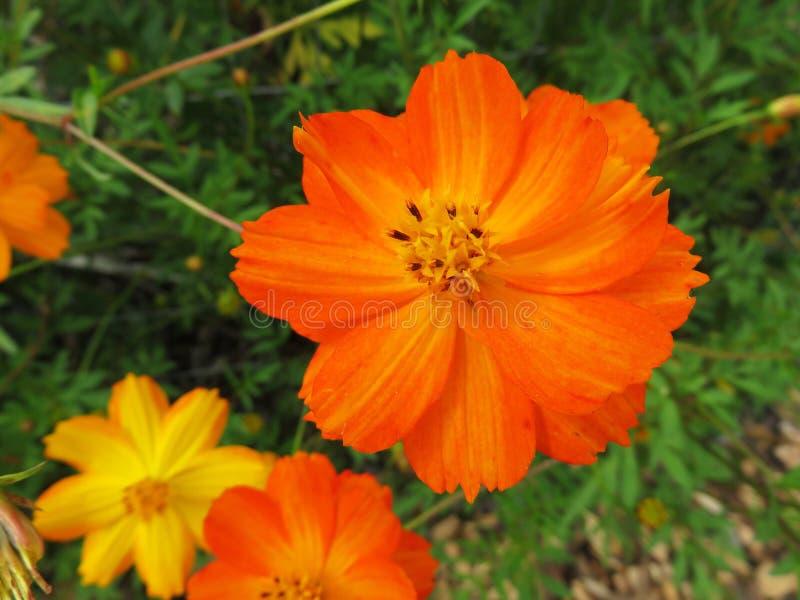 Fleurs oranges et jaunes d'été images stock
