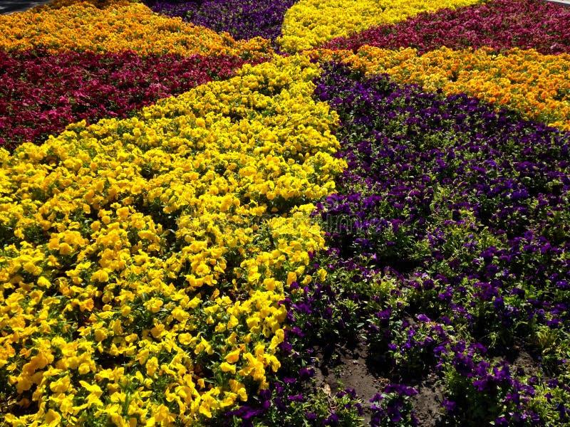 Fleurs ornementales photo stock