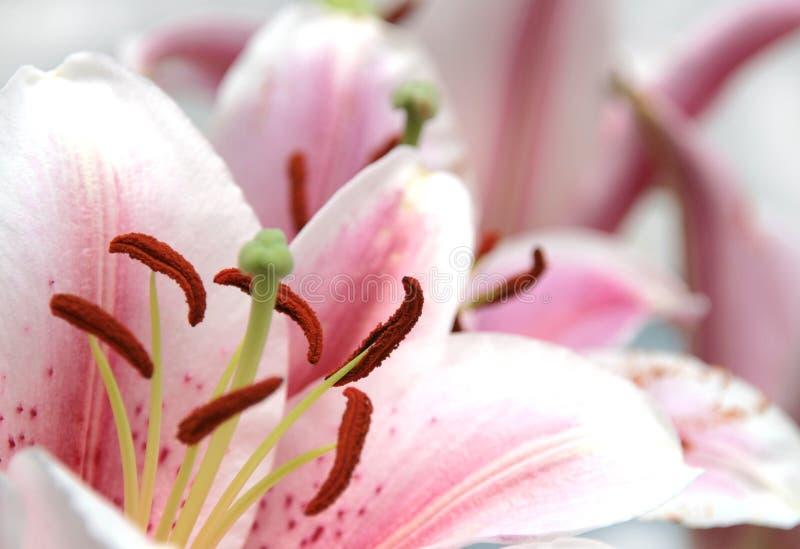 Fleurs ornementales photos stock