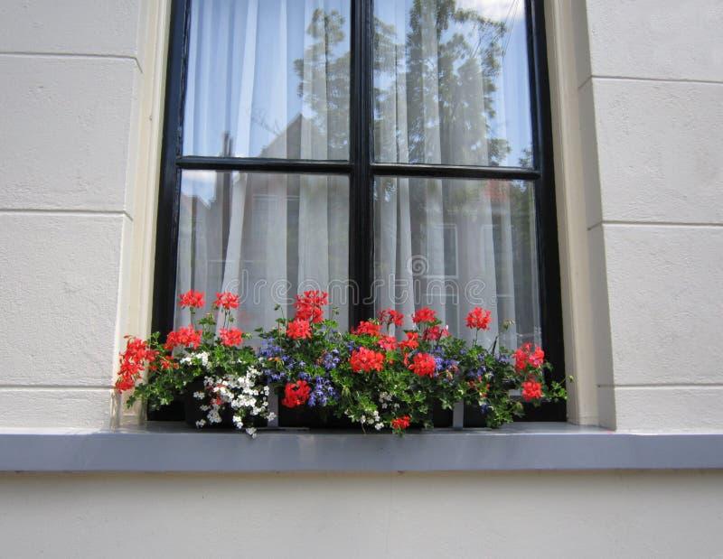 Fleurs par la maison hollandaise images stock