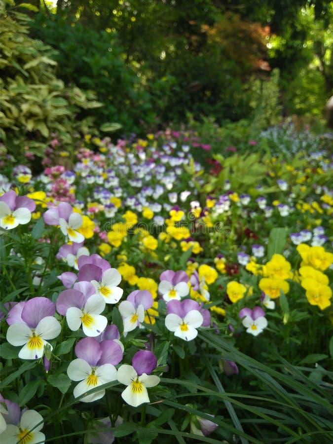 Fleurs par le lac images libres de droits