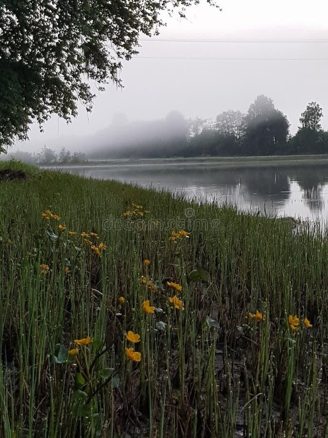 Fleurs par une rivière brumeuse image libre de droits