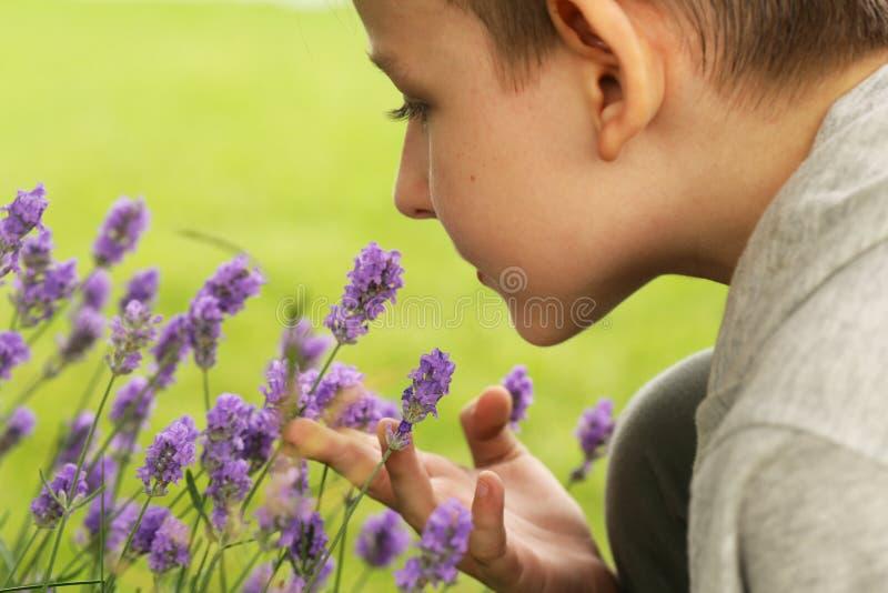 Fleurs parfumées de lavande fraîches image stock