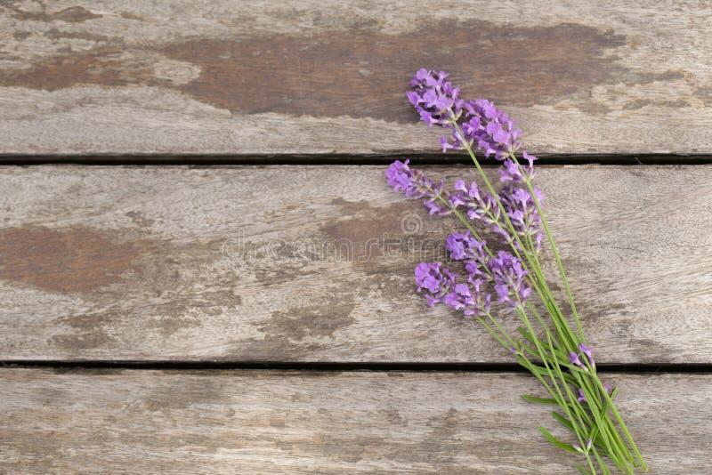 Fleurs parfumées de lavande fraîches photo stock