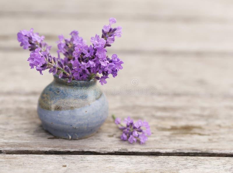 Fleurs parfumées de lavande fraîches images stock