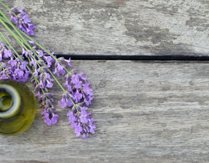 Fleurs parfumées de lavande fraîches photographie stock libre de droits