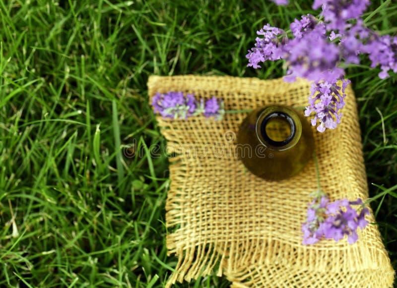 Fleurs parfumées de lavande fraîches photographie stock