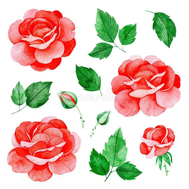 Fleurs peintes à la main de roses d'aquarelle, et feuilles beau clipart 11 d'isolement illustration de vecteur