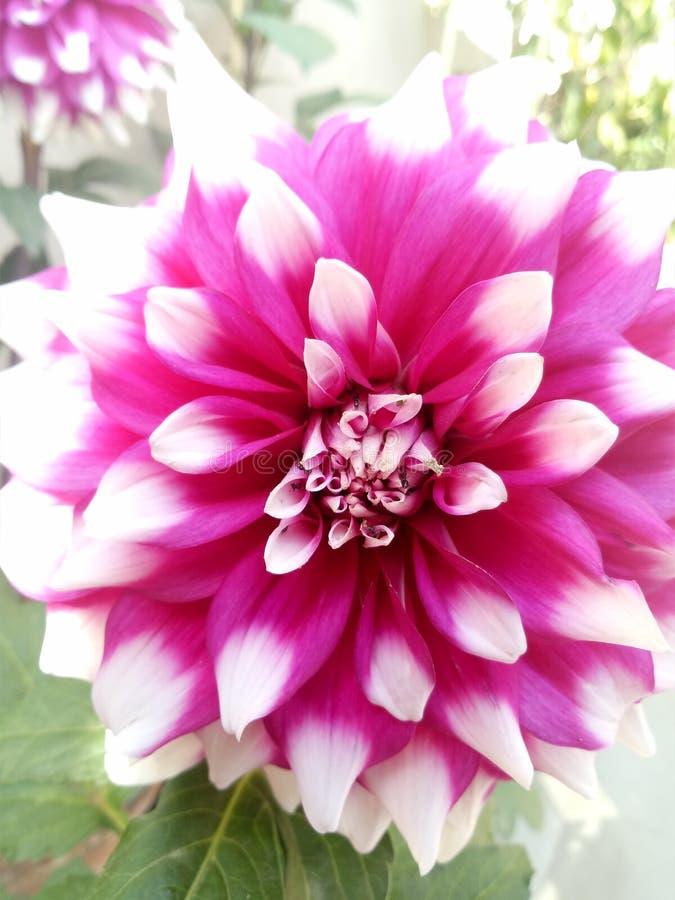 Fleurs pittoresques photos stock