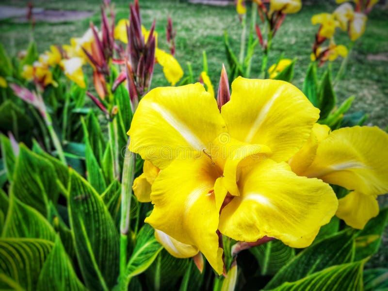 Fleurs pour le beau images stock