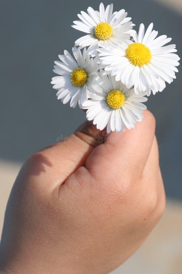 Fleurs pour vous image libre de droits