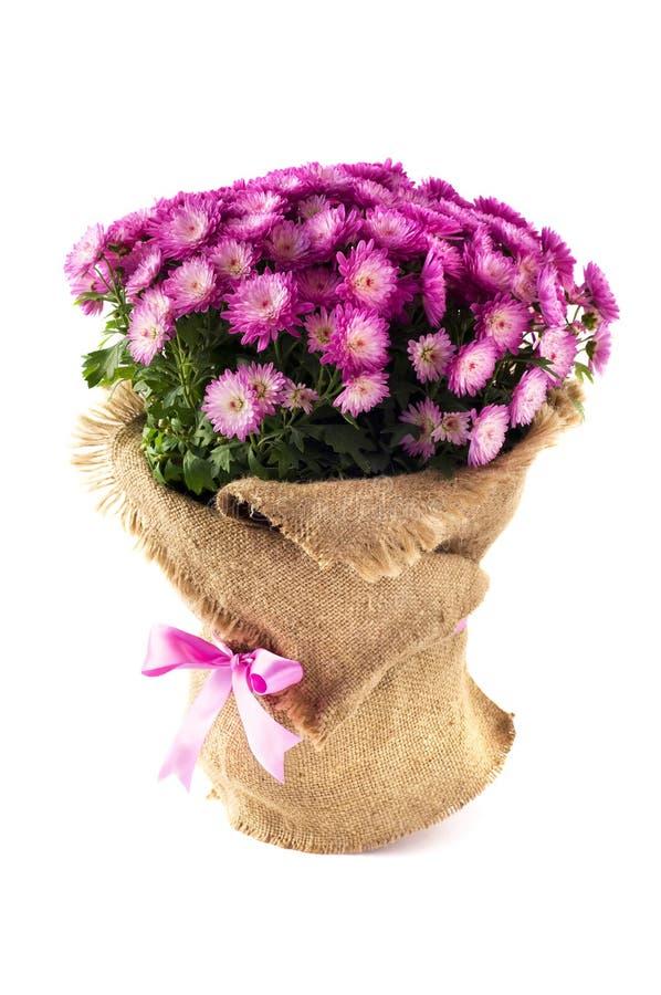 Fleurs pourprées décorées de la toile d'isolement sur t image stock