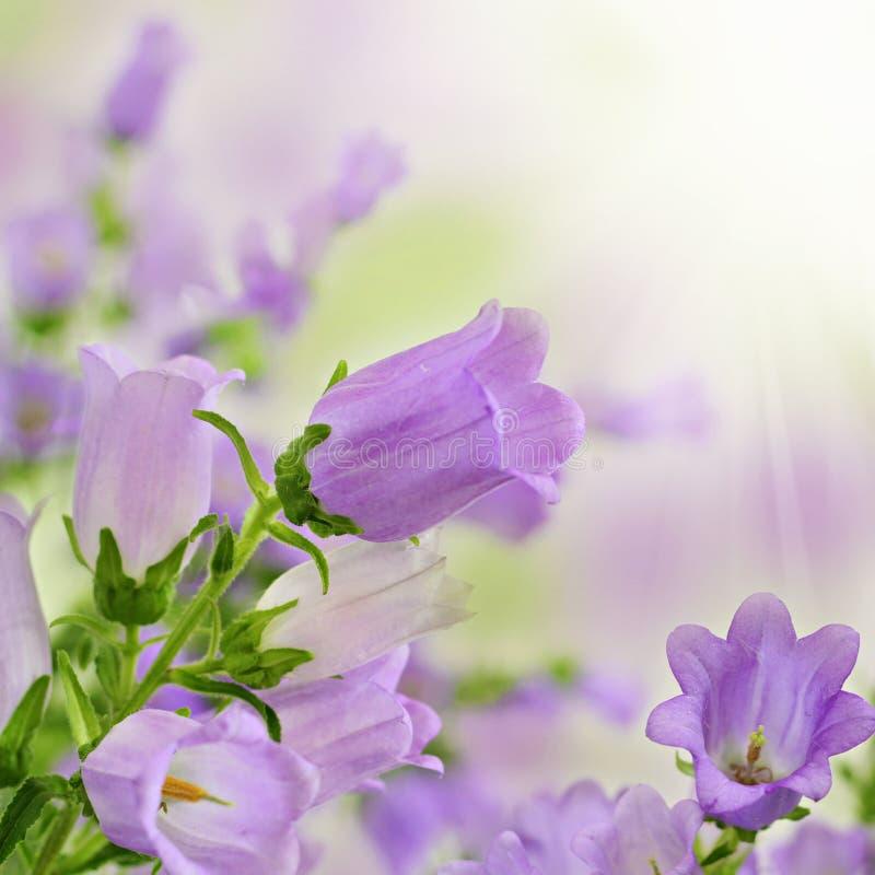 Fleurs pourprées d'été de source sur le fond de bokeh photographie stock