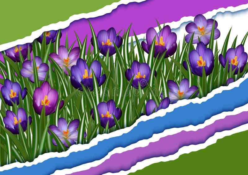 Fleurs pourprées de safran illustration de vecteur