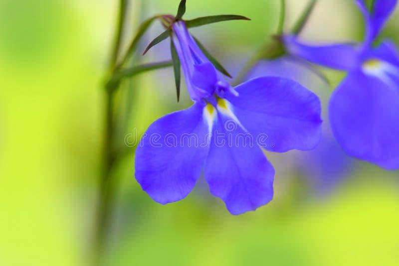 Fleurs pourprées macro photos libres de droits