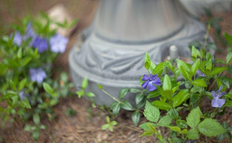 Fleurs pourpres avec des feuilles sur un fond brouillé du pied d'un pilier en métal photos libres de droits