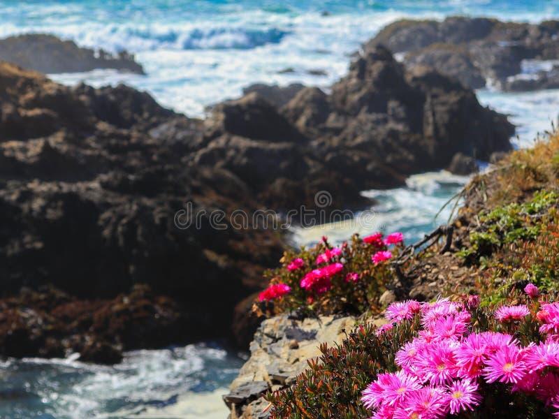 Fleurs pourpres avec le fond d'océan photos stock