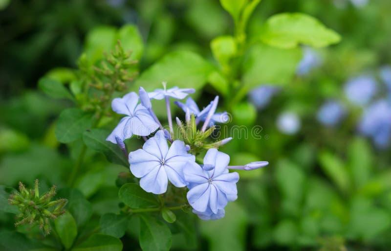 Fleurs pourpres bleues en nature photographie stock