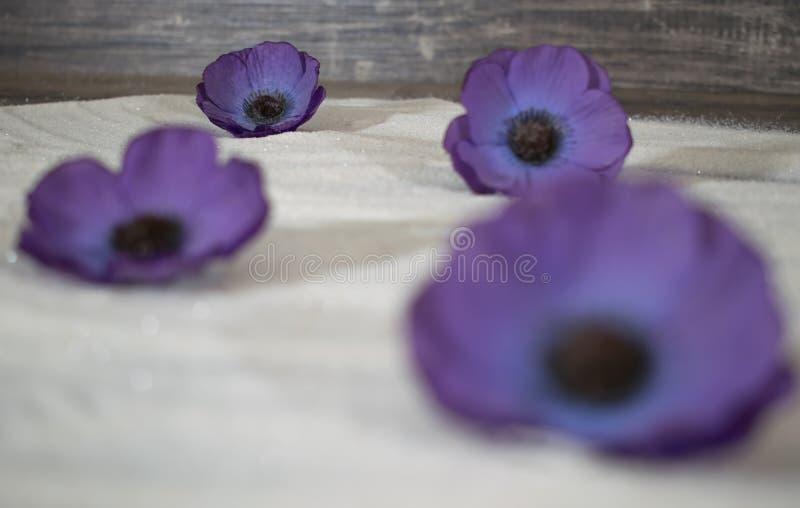 Fleurs pourpres dans le sable photo stock