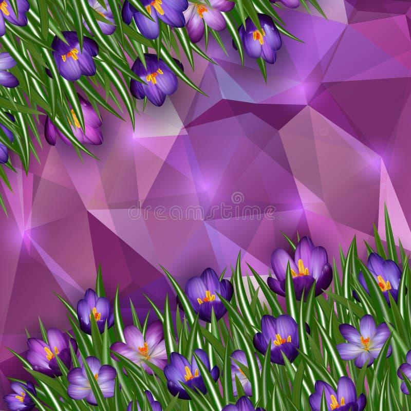 Fleurs pourpres de crocus avec le fond de triangle illustration de vecteur