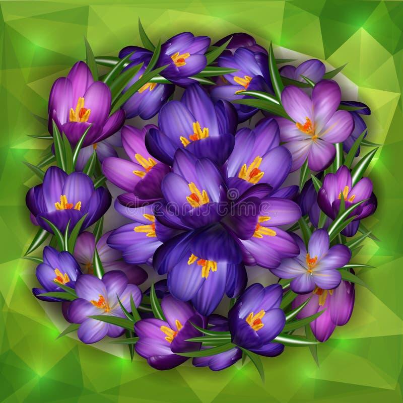 Fleurs pourpres de crocus avec le fond de triangle illustration stock